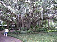 Banyan Tree photo taken by Don McDonald at the Cypress Gardens in Florida, USA. Cool! (And thanks Don for sending these to me!)