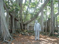 This is the famous Thomas Edison banyan tree from Ft. Myers, Florida (USA). Big thanks to Linda and Darryl Russell for taking th
