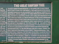 More info about the banyan tree.
