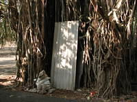 The entranceway to another world, or someone's home? Knock three times before entering? This is one of the most unusual banyan t